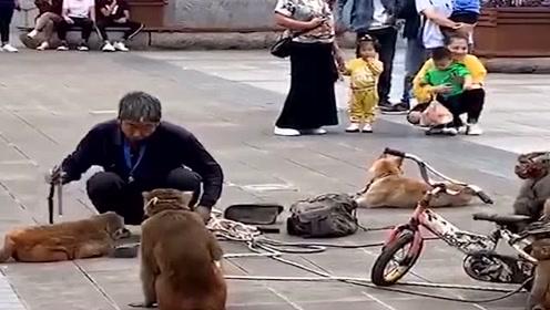 大叔被猴耍了,猴子也太调皮了!