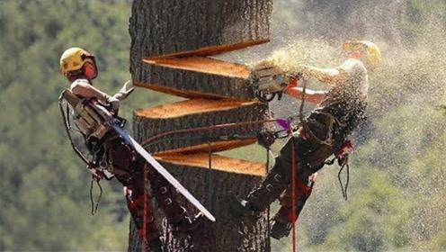 巨大的砍树机器,砍树像切豆腐一样轻松!
