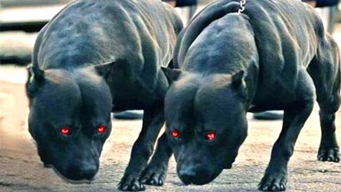 世界上最危险的3种狗:随便一种都能秒杀藏獒,看完可要留意了!
