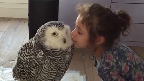 小主人偷偷亲吻猫头鹰,接下来猫头鹰的举动,太搞笑了
