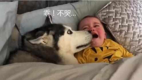 二哈趁宝宝睡觉钻进被窝,宝宝醒来反应让二哈懵了!只能撒娇了