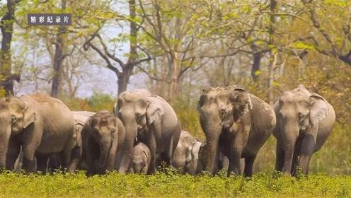 这就是巨兽的领地,差一个河马就成了印度版的野性五霸了!