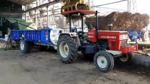 农民刚运来的甘蔗,直接扔进流水线,印度榨糖厂的操作