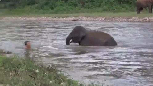 善良的大象,救下落水的游客,镜头记录全过程