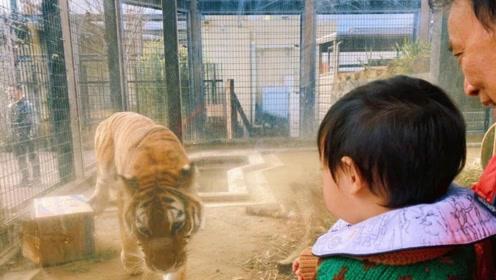 张歆艺一家逛动物园被拍,萌娃四坨被袁弘抱着看蟒蛇,表情超淡定