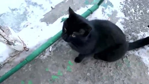 大雪天看到一只黑猫还在室外流浪,要不要跟我一起回家吃小鱼干啊