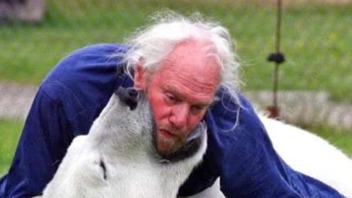 老人好心收养北极熊,16年长到700斤,长大后竟如此对待老人