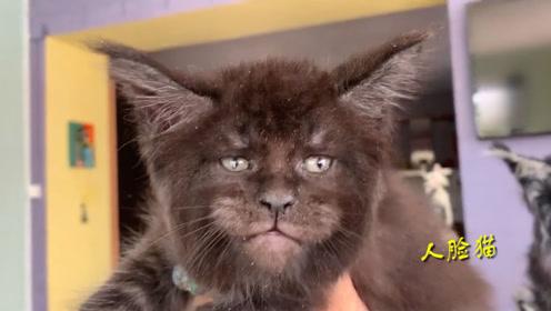 """千万别细看!俄罗斯专家培育出""""人脸猫"""" 眼神超凌厉"""