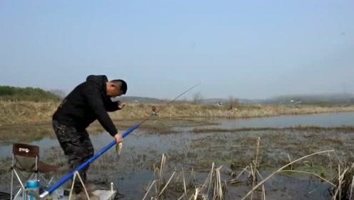 李大毛回老家长竿逗钓野草塘,全都是清一色的大板鲫,鱼情太好了