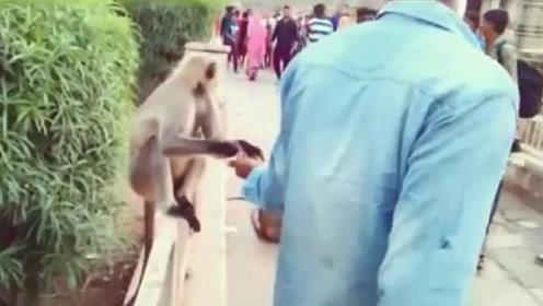 男子一耳光拍翻猴子,猴子当场就懵了,网友:干的漂亮