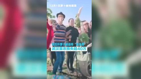 """百万斤萝卜被谣传""""免费"""",村民疯抢!菜农损失近40万!"""