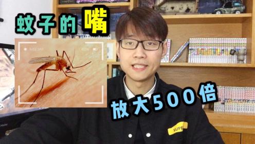 蚊子咬你为啥没感觉?把蚊子的嘴放大500倍锋利无比