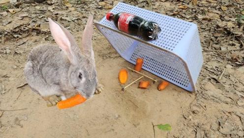 户外捕兔攻略!