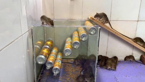 农村小伙易拉罐做成的捕鼠器,老鼠进去出不来,简直就是人才!