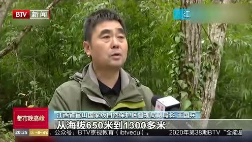 江西:大熊猫重返曾物种灭绝历史分布区