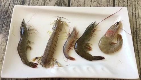 据说这是5种最常见的海虾,谁能全部叫出它们的名字?