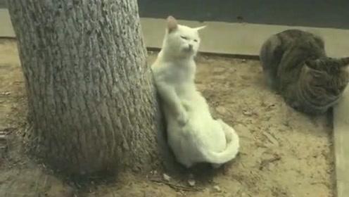 猫咪靠在大树下乘凉,估计是睡着了做梦了,这手法看起来很不一般!