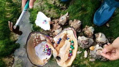 农村大姐海边捡到几只海螺,不料砸开一看,高兴得直呼发财了!