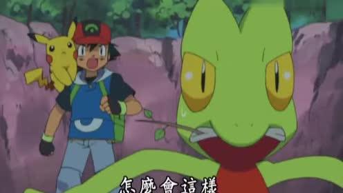 宠物小精灵:两个小蜥蜴好像出现了争吵!互相不搭理着对方!