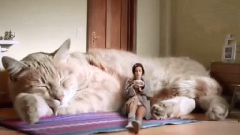 假如世界上真有5米长的巨型猫咪,你敢养一只吗?