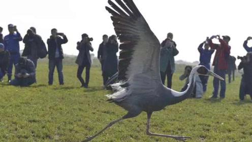 壮观!近300只候鸟鄱阳湖畔放飞:来自各地救护、执法罚没