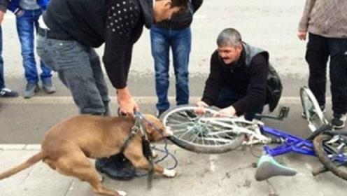 狗狗死死咬住自行车胎不放,车主割开车胎,看到底藏着什么秘密?