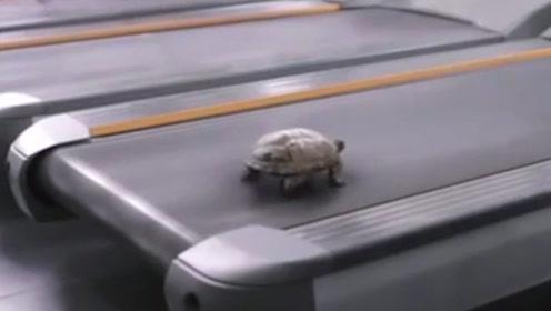 老外将乌龟放在跑步机上,下一秒彻底傻眼了!