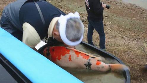要抱起这胖嘟嘟的大肥锦鲤,没点力气,还真怕胜任不了这份差事!