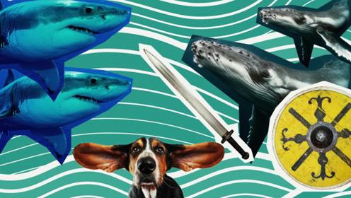 鲸鱼为什么会救海洋生物学家呢?书适优阅科普知识,英语学习