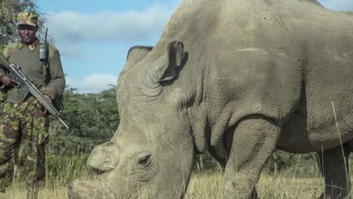 全球仅剩一只的珍贵物种,濒临灭绝,特种兵24小时持枪保护