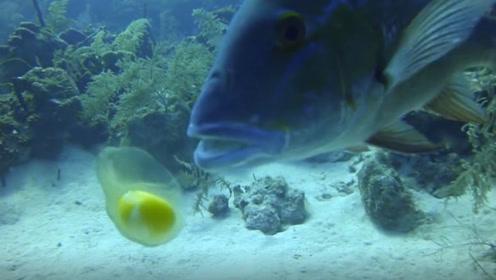 小伙在海底敲开颗鸡蛋,一条鱼游过来后,接下来的画面请憋住别笑