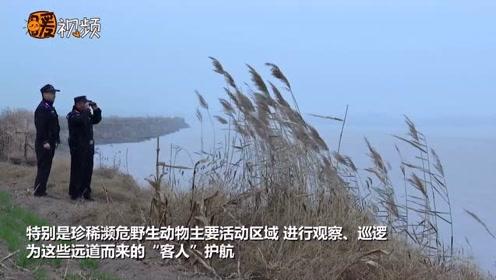 震撼!十万余只大雁迁徙至黄河滩区越冬 成黄河岸边的亮丽风景