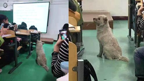 高校狗狗乖巧蹭微积分课,学生:它可能也要考试了