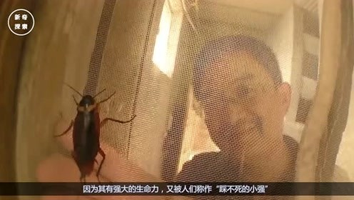 为什么蟑螂是打不死的小强?老外进行试验,原来真的踩不死!