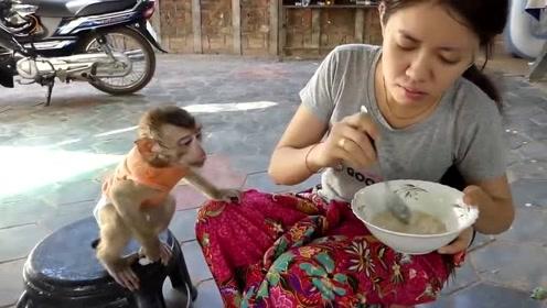 """小猴子的营养早餐,这家伙完美的诠释了""""猴急""""这个词,哈哈!"""