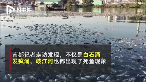 臭气熏天!中山城区多处水面出现大量死鱼,相关部门已介入调查