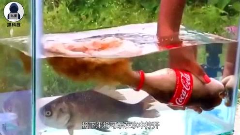 将曼妥思塞入可乐后放进鱼缸,小鱼会发生什么?鱼:我太难了!