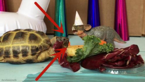 主人给乌龟过生日,乌龟看到蛋糕后秒变吃货,镜头记录全过程