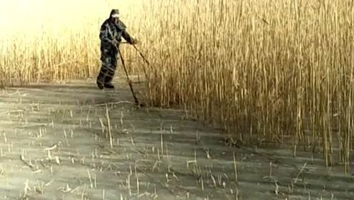东北冬天收芦苇就是这么简单,根本不需要机器,几个人工就能搞定!