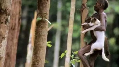 生活在50米树上的神奇部落,探险家:想上厕所怎么办?当地人:真笨!