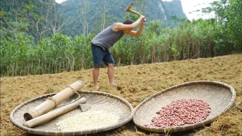 原始技术,越南小哥赵辉路开荒种地,这下不担心没吃的了
