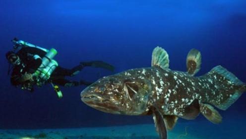 """挺过4次物种灭绝的鱼,是陆地脊椎动物的祖先,在海底能""""走路"""""""