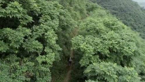 现实版愚公!6旬老人一步一锄,23年修通3000米登峰石阶路