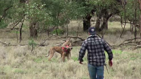 男子为救自己心爱的狗狗和袋鼠练起了拳击