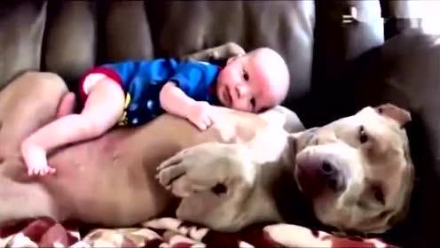 狗狗抱宝宝睡觉的样子,好贴心