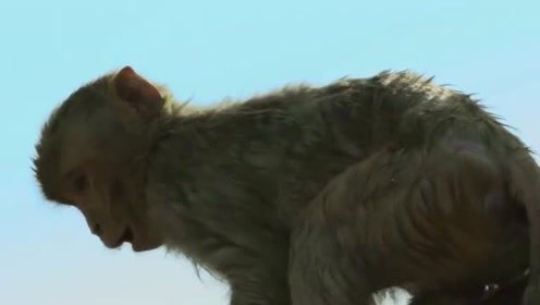 BBC《荒野间谍》淘气的猴子颠覆你的想象