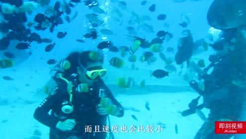 以后要去海岛旅游潜水的得看看了