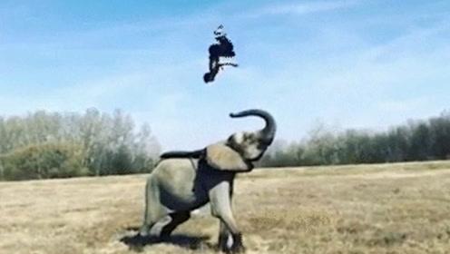 这样的配合简直天衣无缝!大象:我一鼻子就可以送你到太空傲游一圈!