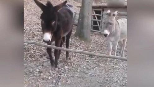 这才是智商碾压!一看就知道这驴和其他货色不一样