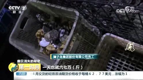 """央视深入调查獐子岛:扇贝死了或为""""人祸"""" 员工监守自盗严重"""